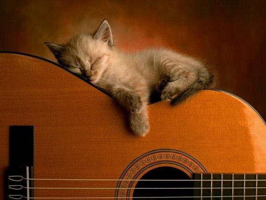 Gato dormido en guitarra